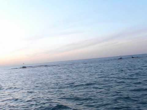 بحر حيفا الرحله