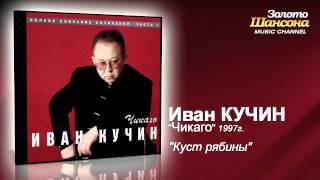 Иван Кучин - Куст рябины