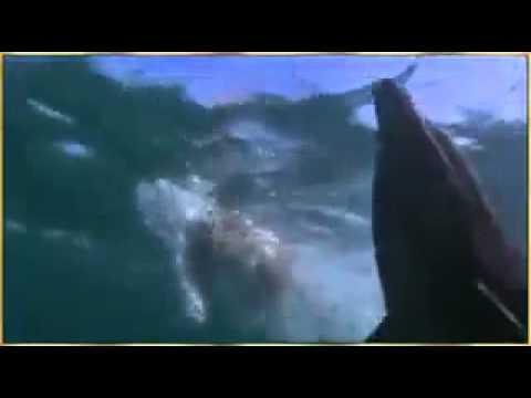 cá heo cứu chó thoát khỏi cá mập.mp4