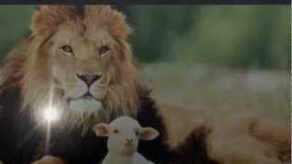 cordero y león(letra) - NEW WINE