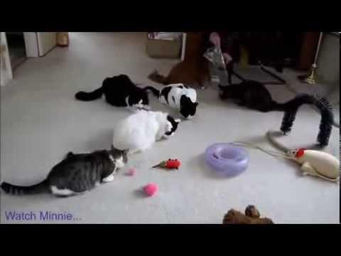 Funny cats mix. Śmieszne koty.