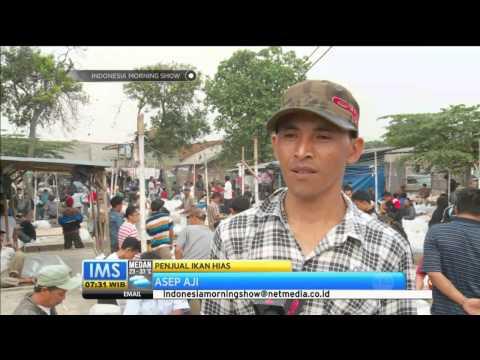 Pasar pusat ikan hias di Parung - IMS