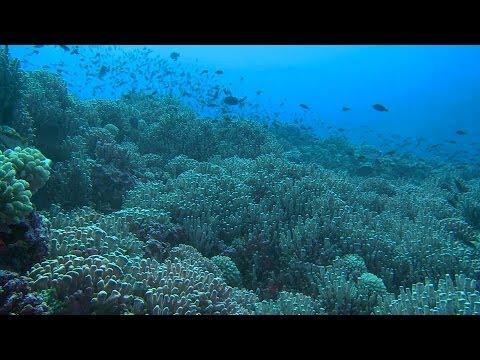 Pitcairn's Beauty | Pew
