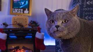 Interactive Cat Live Stream - Behind the Scenes