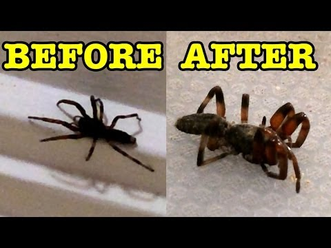 Spider Killer Cute Kids React Dyson DC35 Stick Vacuum Apple iPhone 5s Capture
