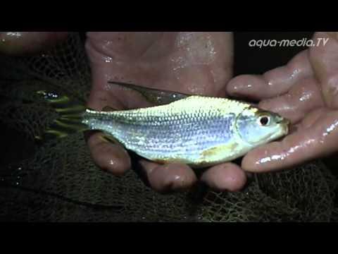 LOS LLANOS - the paradise of ornamental fish
