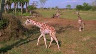 Parque Temático Disney's Animal Kingdom Walt Disney