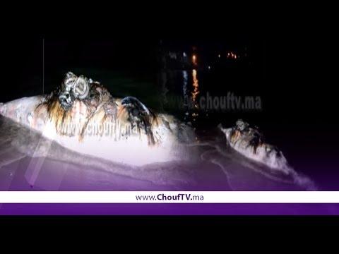 بالفيديو..حوث كبير خرج من شاطئ كابو نيغرو    |   خارج البلاطو