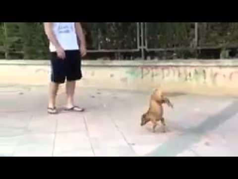 這是未來潛力影星狗狗!