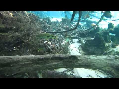 Snorkeling at Rio da Prata # 262 Brazil