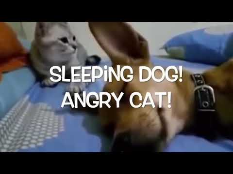 Funny Cat And Dog Clip