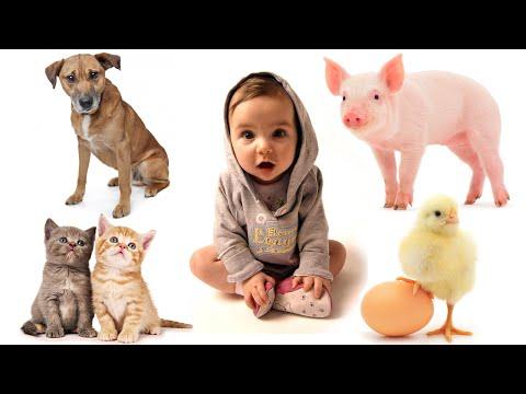 Dạy bé học nói qua các con vật xung quanh | Verion HD