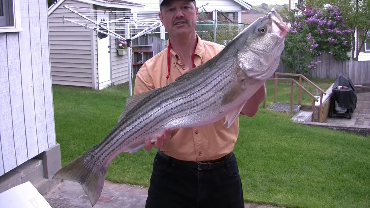 Saltwater fishing in cape cod full length tv show youtube for Saltwater fishing expo