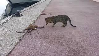 Keď mačka stretne chobotnicu