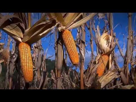 Agro: a indústria-riqueza do Brasil