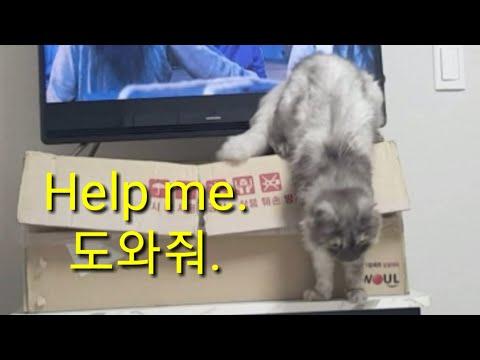 A cute cat in trouble 위험에 빠진 귀여운 고양이 #cat#cutecat