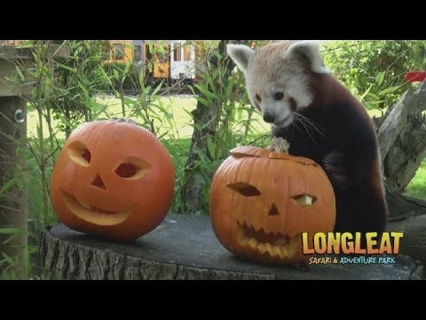 Safari park animals celebrate Halloween early