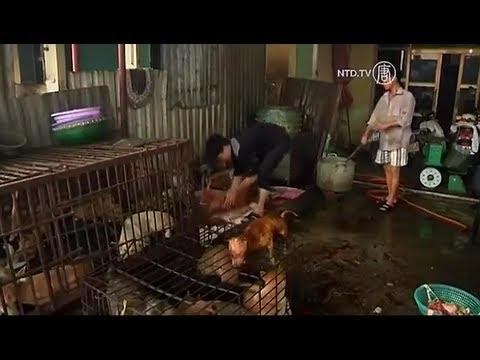 Tình Trạng Ăn Thịt Chó Ở Việt Nam