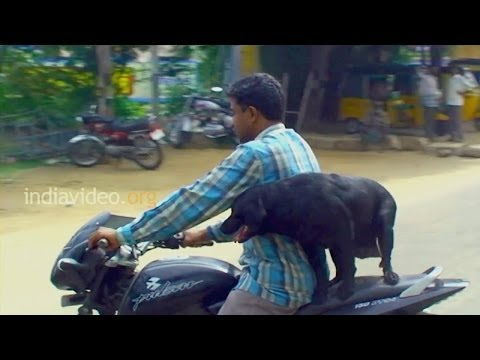 The dog likes travel on bike Tamilnadu