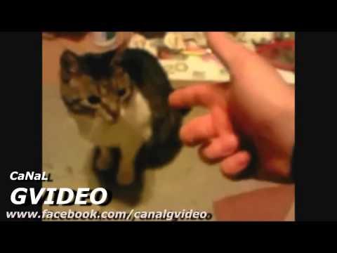 Videos Engraçados   ANIMAIS ENGRAÇADOS FINGINDO DE MORTO   Gato, Hamster, Cachorro 1)