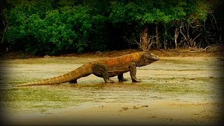 Land of Dragons - Full Documentary Film 2014