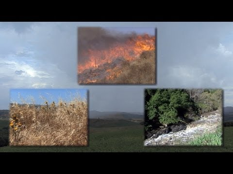 Mediterranean-Climate Ecosystems: Drought Fire and Flood