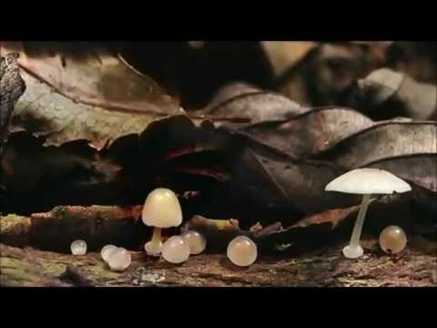Terence McKenna - The Mushroom Speaks