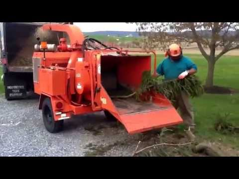 Chipping pine with smith tree service