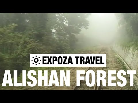 The Alishan Forest Railway Travel Guide
