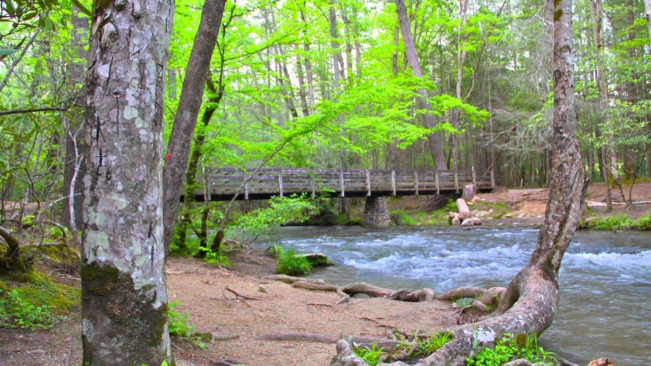 Smoky mountains scenery 15 deer in river youtube for Deer scenery