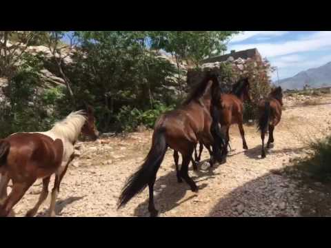 Chasing horses in Dubrovnik