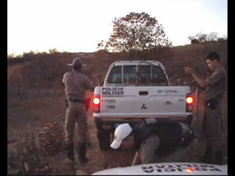 Ronda News - PM solta 54 pássaros silvestres em Espinosa