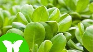 Conocimiento del medio: Las plantas nutrición y fotosíntesis