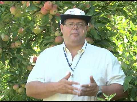 Uso da agricultura de precisão na pequena propriedade - Dia de Campo na TV