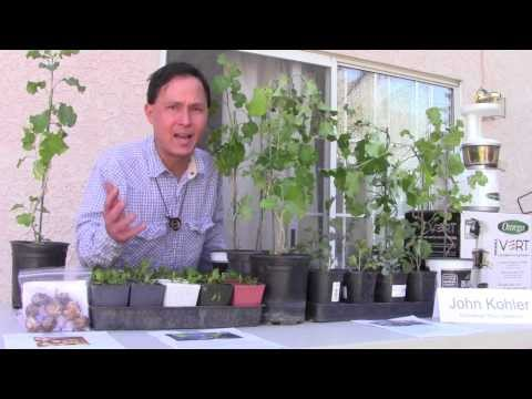 Top 3 Leafy Green Vegetables to Grow and Best 3 Ways to Eat Them