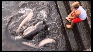 Bocah CIlik Bersahabat Dengan Ikan Pari Raksasa