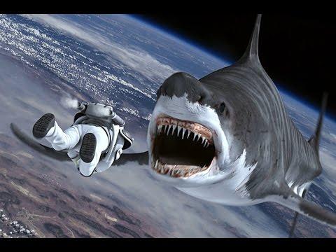 Những loài động vật nguy hiểm nhất Thế Giới #2 ( Thuyết minh )