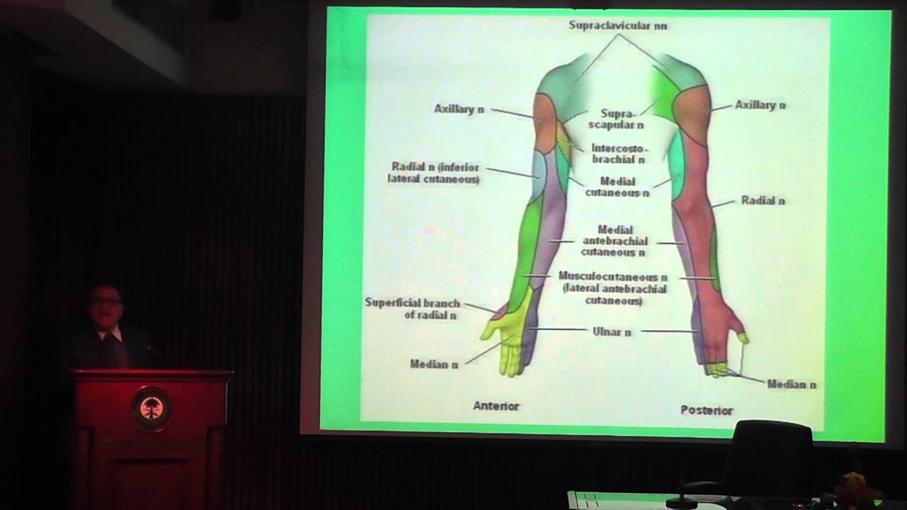 Upper Extremity Dermatomes And   Upper Extremity Myotomes