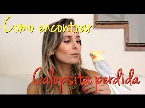 Como encontrar | Calopsita perdida