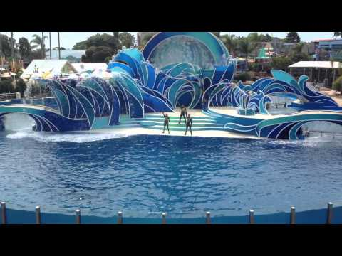 Los Angeles - Sea World - Dolphin Show