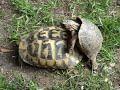 Tortugas Coito