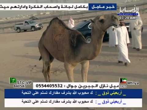 مسيره فردي حراقه عبدالله محمد الشلاحي