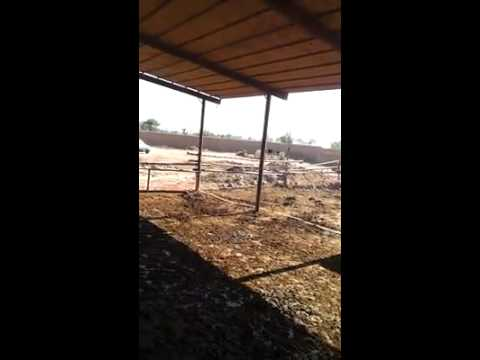 EH  Dairy Farm 419 jb Gojra pakistan part 140