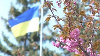 В університеті знову квітнуть сакури