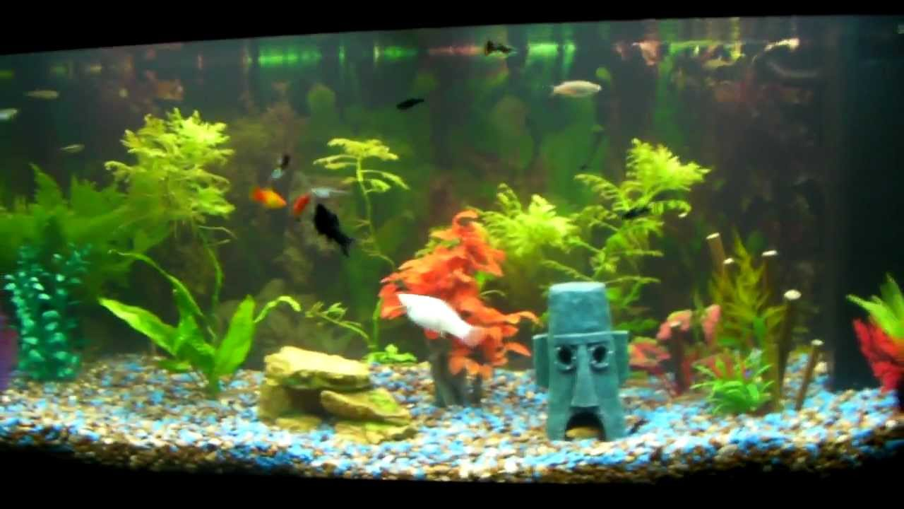 Cool fish tanks youtube cool and crazy fish tanks for Youtube fish tank