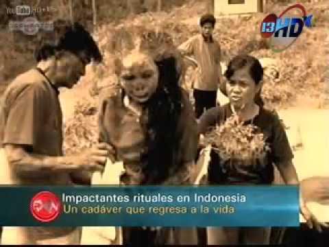 xác chết biết đi do người dân Toraja làm 'ma thuật'.