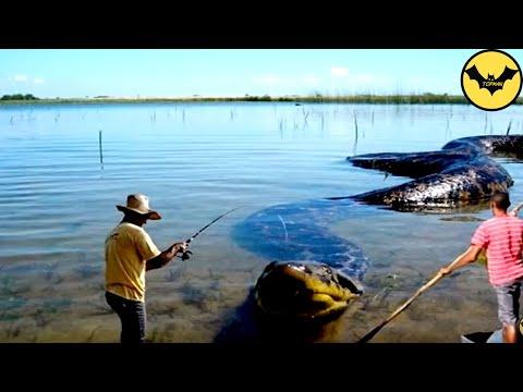 5 Animales a los que JAMÁS debes acercarte en la selva amazónica