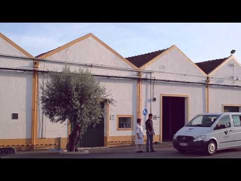 Gallo Azeite Novo Primeira Colheita 2012-13 - Ritual da Tiborna