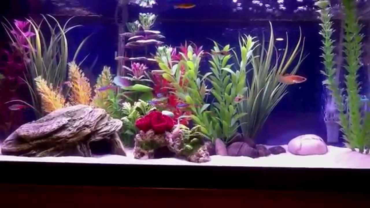 20 gallon freshwater aquarium youtube