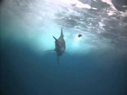 Tow cam - Marlin - Gold Coast Australia